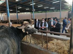 وزير التعليم العالي ورئيس جامعة بنها يتفقدان المزارع الإنتاجية بمشتهر